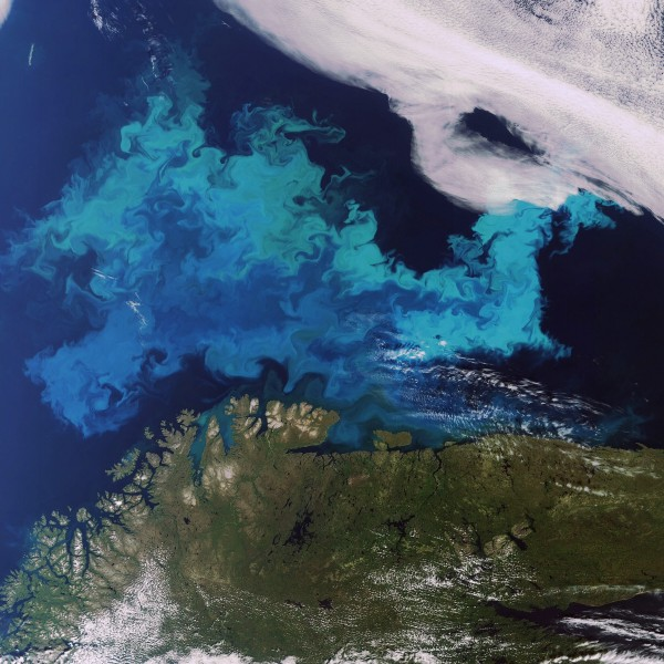 Observation de planctons dans la mer de Barents par Envisat © Envisat
